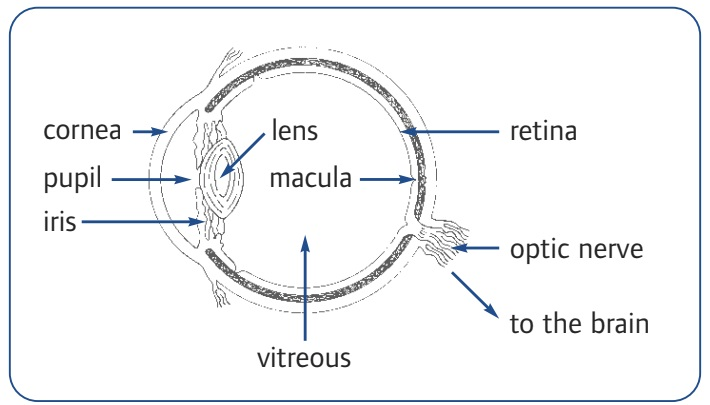 Understanding age-related macular degeneration